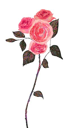 flower illustration - Pink Rose Plant On White Background Stock Photo - Premium Royalty-Free, Code: 6111-06728654