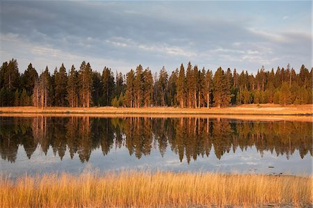 Trees reflected in still lake Stock Photo - Premium Royalty-Free, Code: 6113-06625499