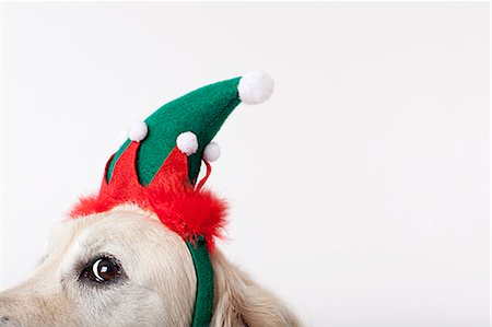 funny pose - Close up of dog wearing Christmas hat Stock Photo - Premium Royalty-Free, Code: 6113-06626219