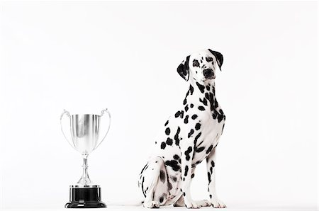 Dog sitting by trophy Stock Photo - Premium Royalty-Free, Code: 6113-06626231