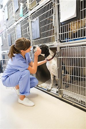 Vet putting dog in kennel Stock Photo - Premium Royalty-Free, Code: 6113-06626422
