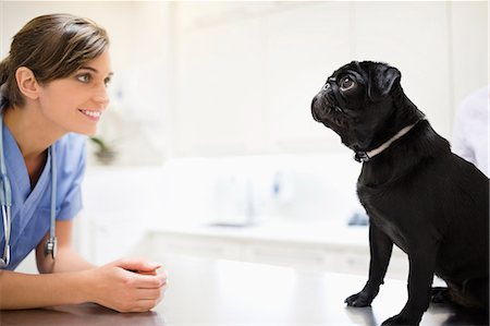 dogs in nature - Veterinarian greeting dog in vet's surgery Stock Photo - Premium Royalty-Free, Code: 6113-06626426