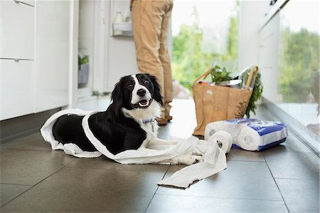 Dog unrolling toilet paper on floor Stock Photo - Premium Royalty-Free, Code: 6113-06720863