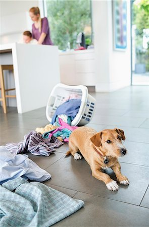 Dog sitting by spilled laundry basket Stock Photo - Premium Royalty-Free, Code: 6113-06720878