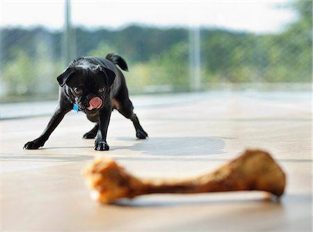 Dog licking his lips at bone Stock Photo - Premium Royalty-Free, Code: 6113-06720891