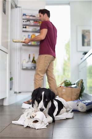 fridge - Dog chewing up toilet paper in kitchen Stock Photo - Premium Royalty-Free, Code: 6113-06720941