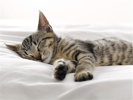 Kitten napping on blankets Stock Photo - Premium Royalty-Free, Code: 6113-07543098