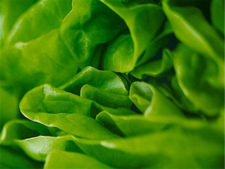 Extreme close up of round lettuce Stock Photo - Premium Royalty-Free, Code: 6113-07565178