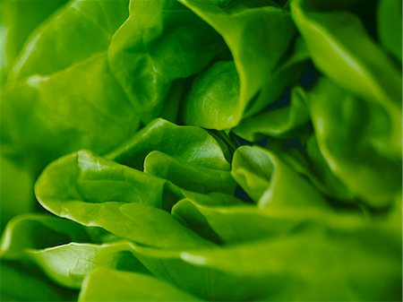 Extreme close up of round lettuce Stock Photo - Premium Royalty-Free, Code: 6113-07565178