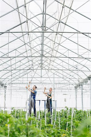 Workers adjusting sprinklers in greenhouse Stock Photo - Premium Royalty-Free, Code: 6113-07589128