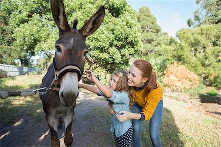 Student and teacher petting donkey at zoo Stock Photo - Premium Royalty-Free, Code: 6113-07731272