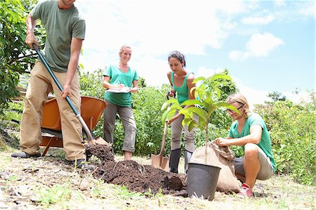 Four people planting tree in community garden Stock Photo - Premium Royalty-Free, Code: 6113-07808444