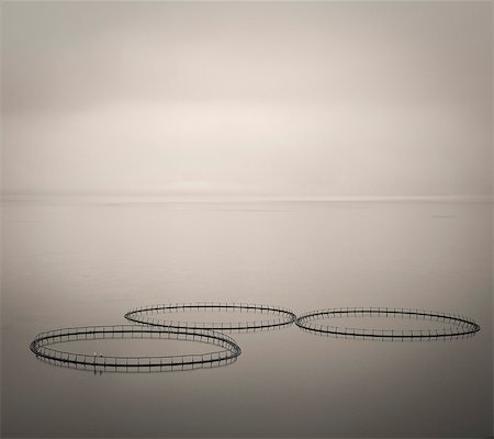 photography - Salmon farm rings floating on calm water, Faroe Islands Stock Photo - Premium Royalty-Free, Code: 6113-08088339