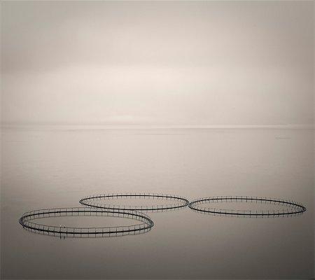 photography - Salmon farm rings floating on calm water, Faroe Islands Stock Photo - Premium Royalty-Free, Code: 6113-08088339