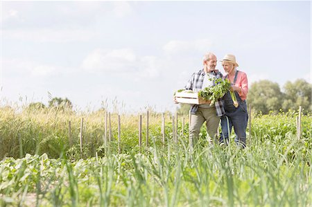smiling - Senior couple harvesting vegetables in sunny garden Stock Photo - Premium Royalty-Free, Code: 6113-08220476