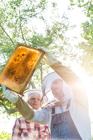 Beekeepers in protective clothing examining bees on honeycomb Stock Photo - Premium Royalty-Free, Code: 6113-08220529