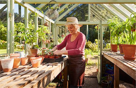 senior women - Senior woman potting plants in sunny greenhouse Stock Photo - Premium Royalty-Free, Code: 6113-08424203