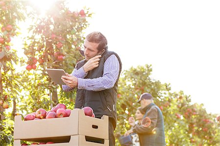 farm phone - Male farmer with digital tablet talking on cell phone in sunny apple orchard Stock Photo - Premium Royalty-Free, Code: 6113-08805810