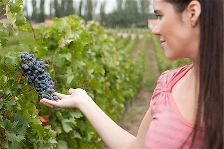 people in argentina - Woman looking at grapes Stock Photo - Premium Royalty-Free, Code: 6114-06598518