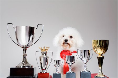 Dog with a row of trophies Stock Photo - Premium Royalty-Free, Code: 6114-06650565