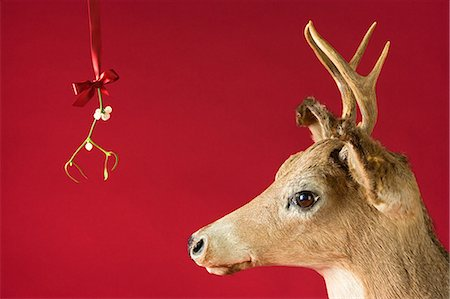 A reindeer underneath mistletoe Stock Photo - Premium Royalty-Free, Code: 6114-06662972