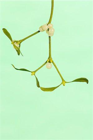Mistletoe Stock Photo - Premium Royalty-Free, Code: 6114-06611689