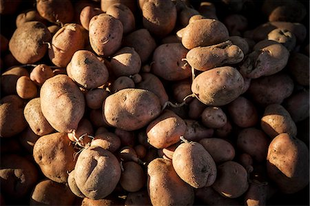 Fresh Potatoes, Croatia, Slavonia, Europe Stock Photo - Premium Royalty-Free, Code: 6115-06778678