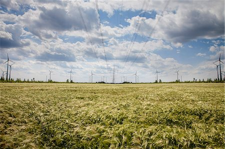 Wind farm, Dessau, Germany, Europe Stock Photo - Premium Royalty-Free, Code: 6115-06778698