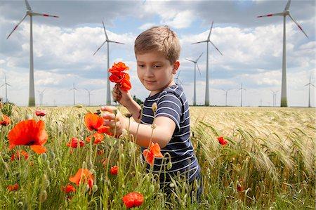 Boy On Field Plucking Poppy Flowers, Dessau, Germany, Europe Stock Photo - Premium Royalty-Free, Code: 6115-06778704