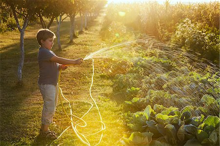 Boy Watering Garden, Croatia, Slavonia, Europe Stock Photo - Premium Royalty-Free, Code: 6115-06732946