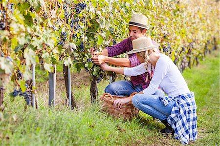 Grape harvest, Young couple picking grapes, Slavonia, Croatia Stock Photo - Premium Royalty-Free, Code: 6115-07282889