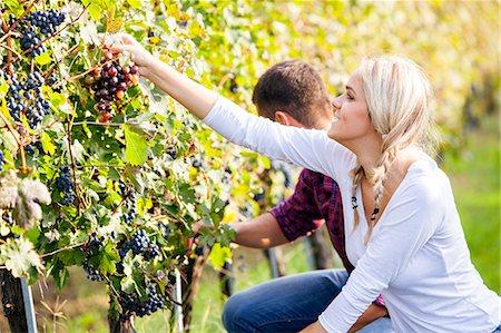 Grape harvest, young couple picking grapes, Slavonia, Croatia Stock Photo - Premium Royalty-Free, Code: 6115-07282890