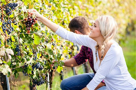 Grape harvest, young couple picking grapes, Slavonia, Croatia Stock Photo - Premium Royalty-Free, Code: 6115-07282890