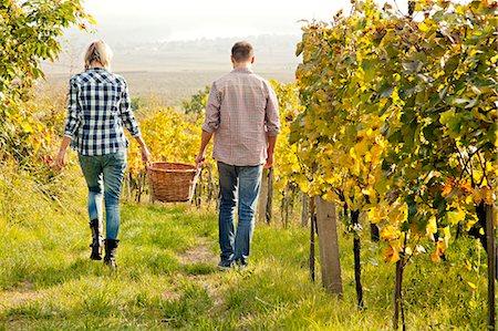 Grape harvest, young couple carrying basket, Slavonia, Croatia Stock Photo - Premium Royalty-Free, Code: 6115-07282908