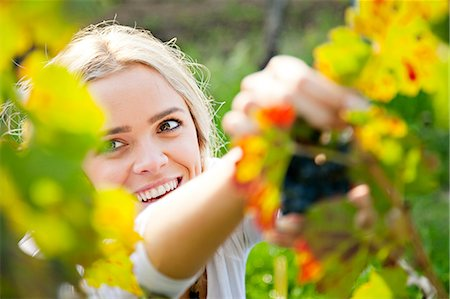 Grape harvest, young woman picking grapes, Slavonia, Croatia Stock Photo - Premium Royalty-Free, Code: 6115-07282916