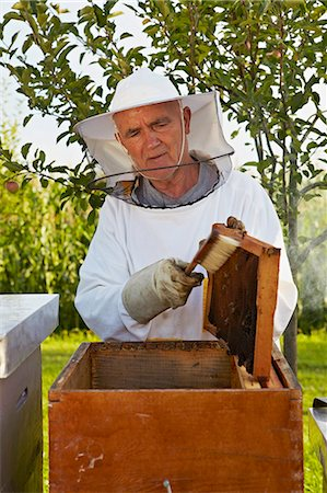Beekeeper In Garden, Croatia, Europe Stock Photo - Premium Royalty-Free, Code: 6115-07539633