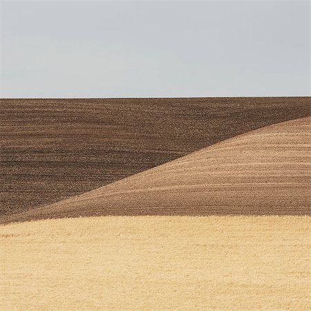 Wheat Fields In Washington. A Ripe Crop And Undulating Landscape. Stock Photo - Premium Royalty-Free, Code: 6118-07122123