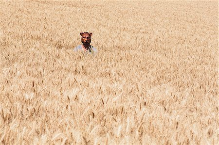 funny looking people - Wheat Fields In Washington. A Person Wearing A Bear Mask Looking Up Over The Ripe Crop. Stock Photo - Premium Royalty-Free, Code: 6118-07122120