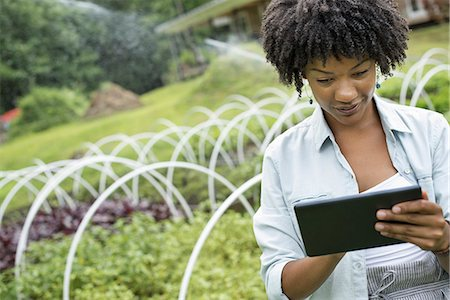 An organic horticultural nursery and farm outside Woodstock. A woman holding a digital tablet. Stock Photo - Premium Royalty-Free, Code: 6118-07351523