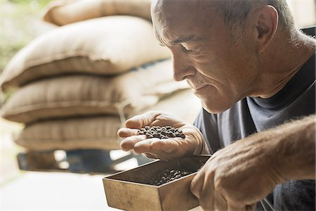 smelling - A man examining and smelling the aroma of beans at a coffee bean processing shed, on a farm. Stock Photo - Premium Royalty-Free, Code: 6118-07352127