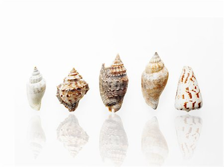 five - Sea shells in a row, showing a variety of size, shape and pattern. Stock Photo - Premium Royalty-Free, Code: 6118-07352322