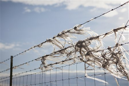 Plastic bags caught on a barbed wire fence Stock Photo - Premium Royalty-Free, Code: 6118-07352732