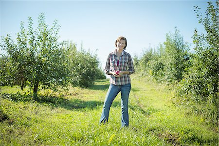 single fruits tree - A woman in a plaid shirt picking apples in the orchard at an organic fruit farm. Stock Photo - Premium Royalty-Free, Code: 6118-07353003