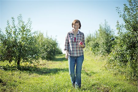 single fruits tree - A woman in a plaid shirt picking apples in the orchard at an organic fruit farm. Stock Photo - Premium Royalty-Free, Code: 6118-07353004