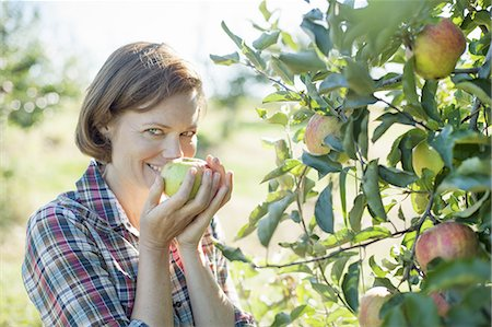 single fruits tree - A woman in a plaid shirt smelling the freshly picked ripe apple in her hand at an organic fruit farm. Stock Photo - Premium Royalty-Free, Code: 6118-07353022