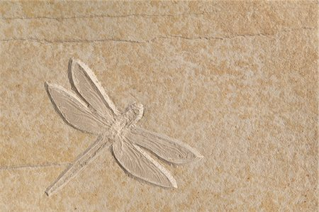 dragon fly - A complete Dragonfly fossil on a smooth piece of stone. Solnhofen, Germany. Stock Photo - Premium Royalty-Free, Code: 6118-07353170