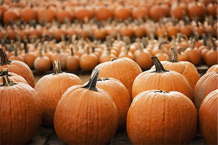 Pumpkins arranged in rows to be hardened off and dried. Organic farm. Stock Photo - Premium Royalty-Free, Code: 6118-07353350