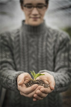 A person in a commercial glasshouse, holding a small plant seedling in his cupped hands. Stock Photo - Premium Royalty-Free, Code: 6118-07354186