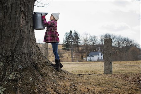 A maple syrup farm. A young girl holding a bucket which is tapping the sap from the tree. Stock Photo - Premium Royalty-Free, Code: 6118-07354204