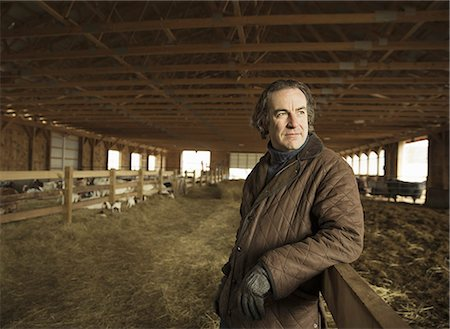 An Organic Farm in Winter in Cold Spring, New York State. A farmer in a livestock barn with sheep at lambing time. Stock Photo - Premium Royalty-Free, Code: 6118-07354443